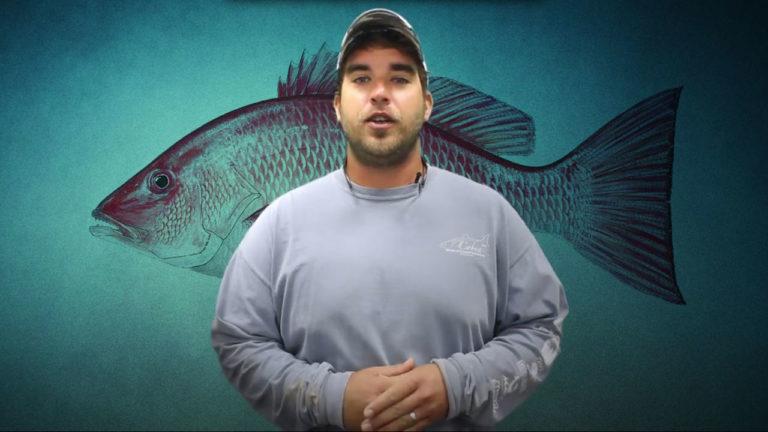 destin-fishing-report-series
